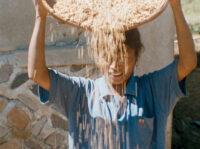 Rijst (Rice), 1995