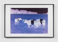 Mad cows!, 2002