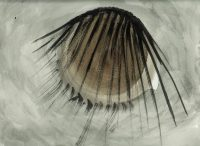 Wimpers (Eyelashes), 2008
