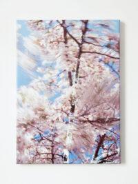 Bloesem tak (Blossom branch), 2009