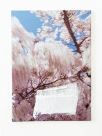 Bloesem zwiep (Blossom swish), 2009