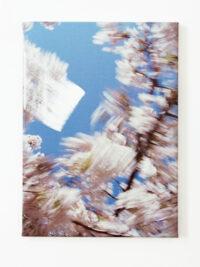 Bloesem veeg (Blossom sweep), 2009