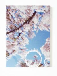 Bloesem focus (Blossom focus), 2009
