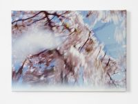Bloesem sneeuw (Blossom snow), 2009
