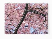 Bloesem vertakking (Blossom branch), 2009