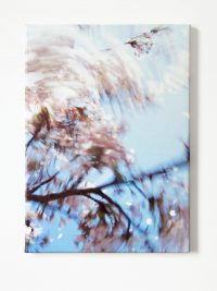 Bloesemblaadjes (Blossom petals), 2009