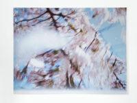 Blossom – snow, 2009