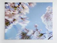 Blossom – bow, 2009