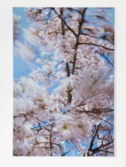 Blossom – branched, 2009