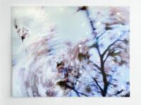 Blossom – petals, 2009