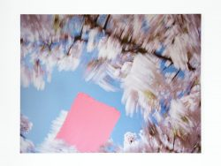 Blossom – sweep, 2009
