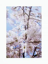 Blossom – twins, 2009