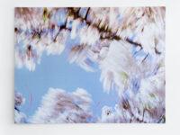 Blossom – bows, 2009