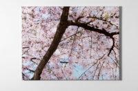 Blossom – seen Ofili, 2010