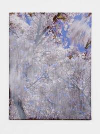 Blossom – drops, 2010