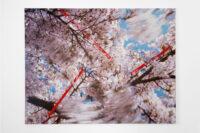 Blossom arms, 2010