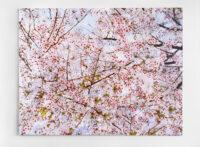 Blossom hearts, 2010