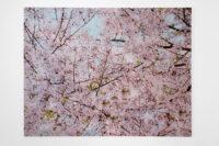 Blossom leaves, 2010