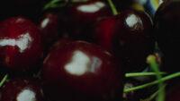 Kersentijd (Cherry season), 2012